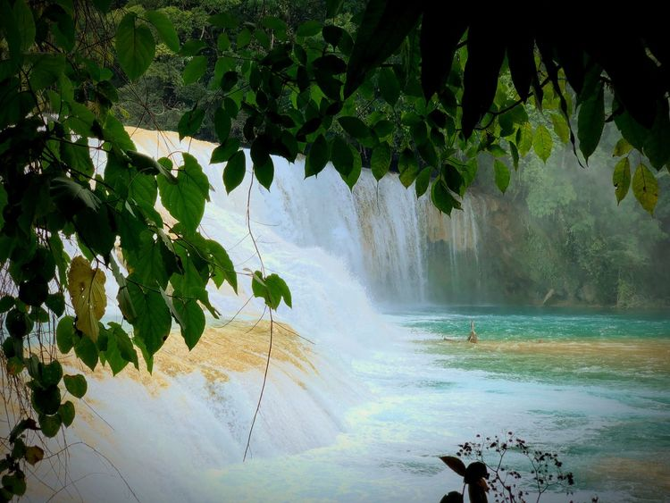 Agua azul Nature 2018 Portrait Vive Mexico Beautty Fsk Love Rasask Water Tree Plant Beauty In Nature Nature Scenics - Nature Waterfall Tranquility Day Outdoors Motion Splashing Growth No People Leaf Plant Part Flowing Water Long Exposure Branch Power In Nature The Great Outdoors - 2018 EyeEm Awards