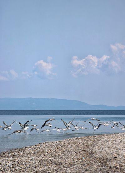 Flock of seagulls on beach against sky