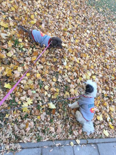 Autumn Autumn Colors Truelove Purelove Dogs Doglover Wintercoat