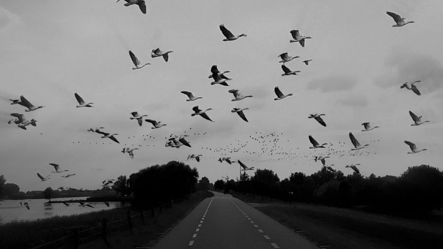 Low angle view of birds flying over countryside road