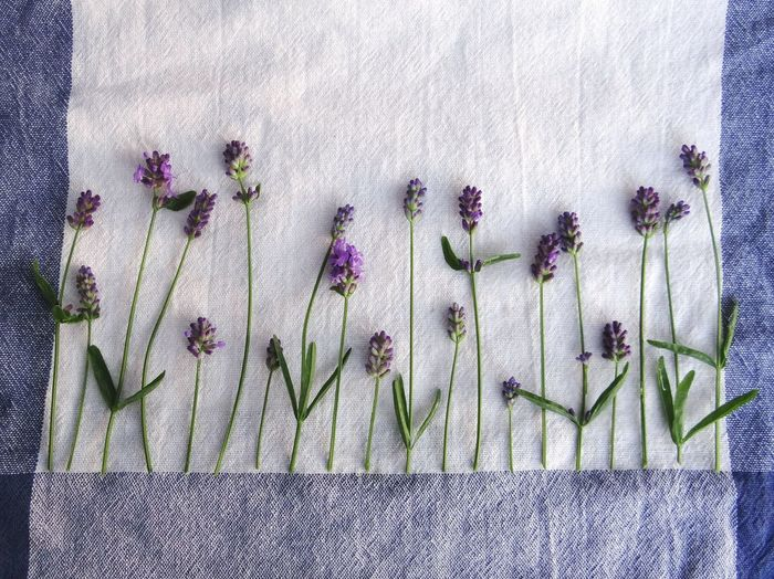 Drying lavender Lavender Lavender Flowers Aroma Aromatic Herb Making Tea Aromatic Plants Purple Flower Purple Drying Herbs Summer Feeling Summertime Beautiful Nature Favorites Relaxing Making Art Drawing With Herbs Playing Playing With Plants Eeyem Nature Lover Herbs in Sweden
