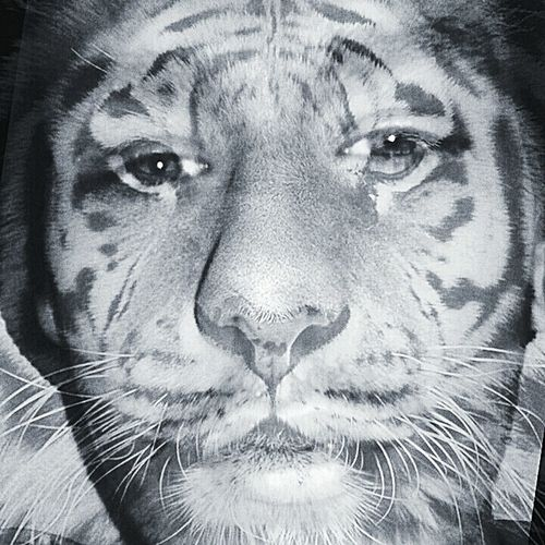 igot the eyes of atiger Abstract Illusion Artistic Tiger Art EyeEm X Getty Images That's Me