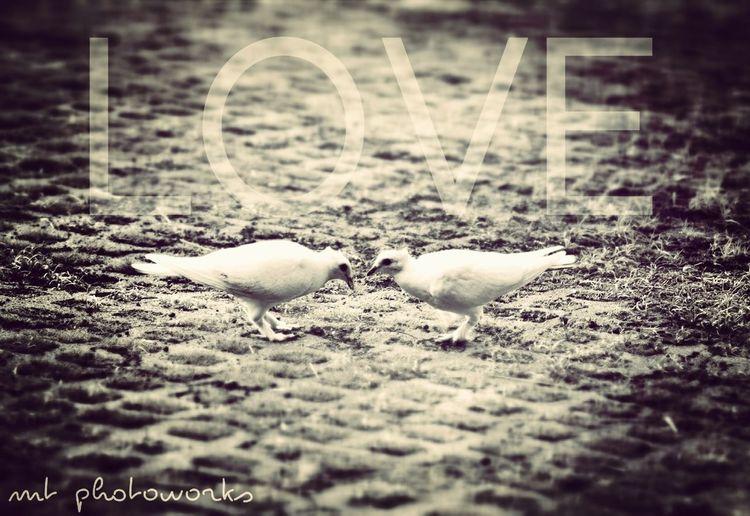 dua sejoli bersama, dunia serasa milik berdua..