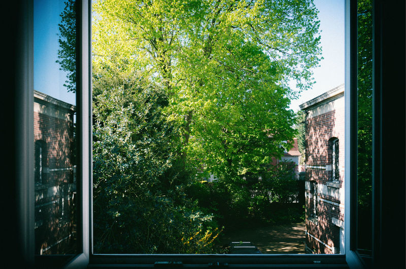 Trees and plants seen through glass window of building