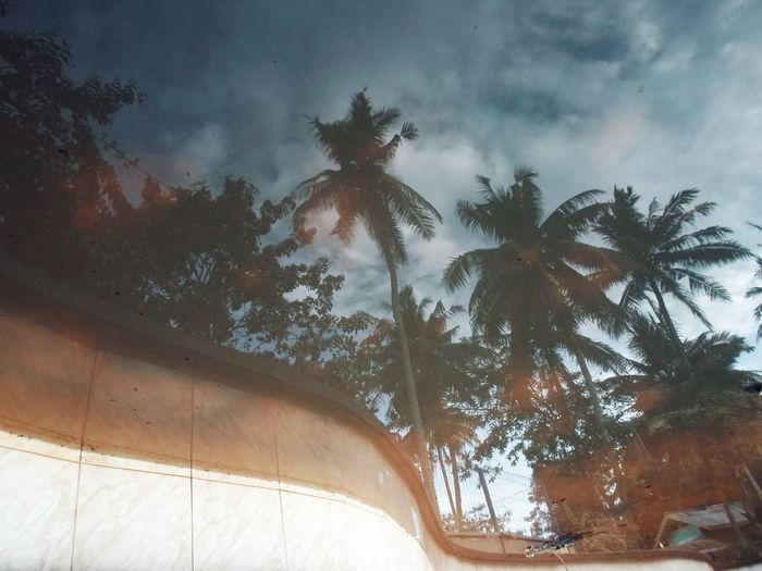 Outdoors Reflections Nature Low Angle View Tree Sky Day Coconut Tree Water Reflections Beauty In Nature