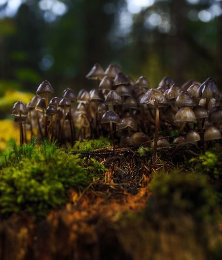 Mushrooms growing on moss covered field