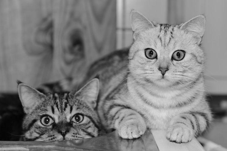 Katzen Cats Cat