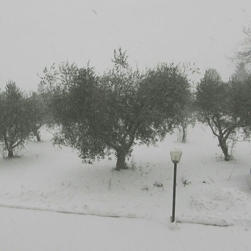 let it snow! ❄☁❄☁❄ Winter Snow Nature