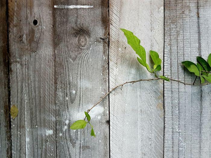 Textured  Branch Leaves Wooden Bridge