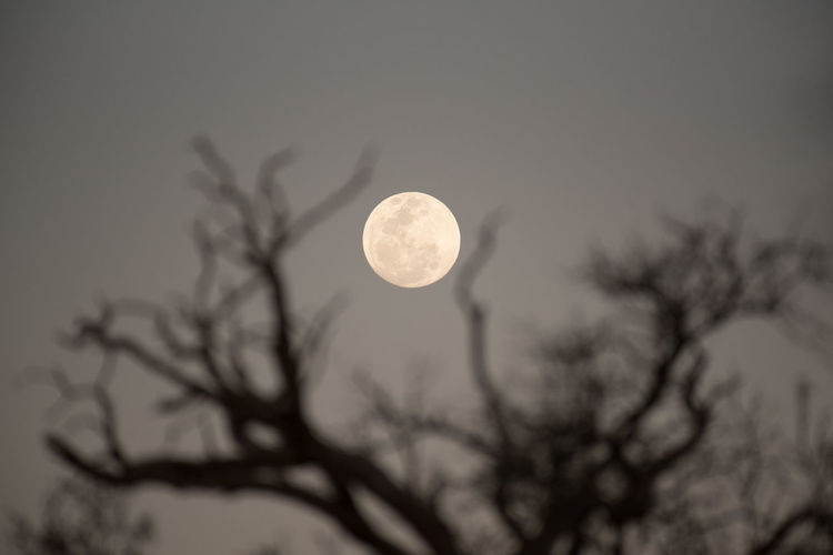Moonlight Darkness Namib Desert Namibia Namibia Landscape Astronomy Beauty In Nature Branch Circle darkness and light Full Moon Moon Moonlight Nature Night No People Outdoors Planetary Moon Plant Scenics - Nature Shape Silhouette Sky Tranquil Scene Tranquility Tree 2018 In One Photograph