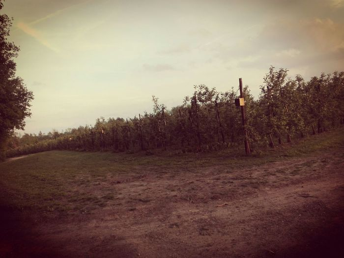 Fruit threes 😍