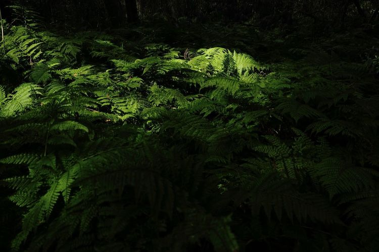 Eos5dmarkiii Green Nature Forest Fern Growth Night Beauty In Nature Tranquility Plant No People Outdoors Tree