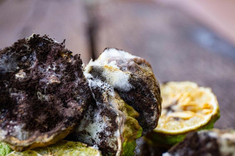 Close-up of mushrooms on rock