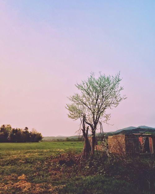 Landscape Bifuka 美深町 Hokkaido Iphonephotography Iphone6plus