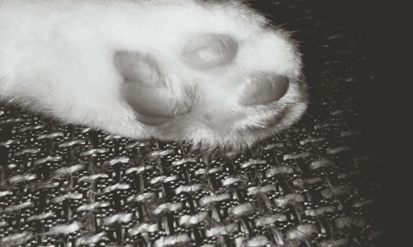 Katzenpfote Süße Katze My Cat♥ Meine Katze Domestic Animals No People B/w Effects
