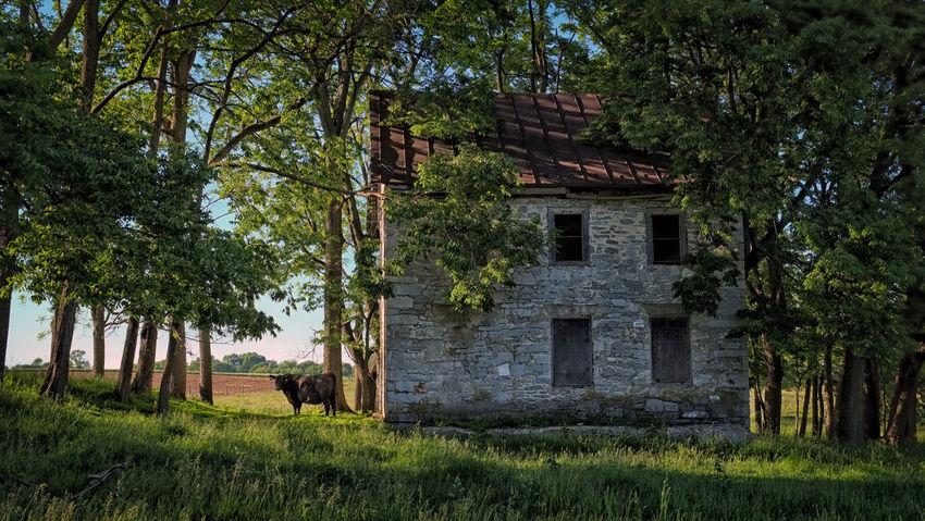 The Traveler - 2015 EyeEm Awards Abandoned Places Farm Life