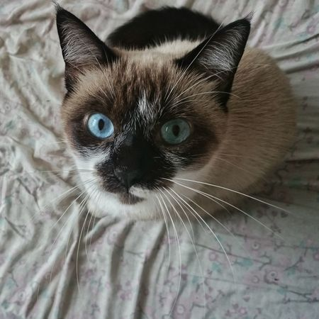 Animal Animal Eye Cat Close-up Cute Domestic Animals Domestic Cat Feline No People Pets