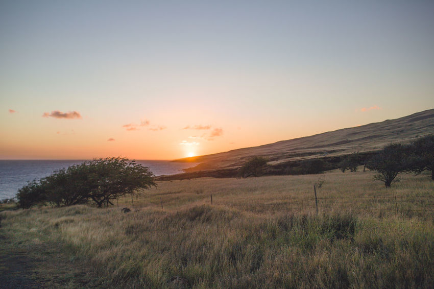 Hanging Out Hawaii Maui Beauty In Nature Day Field Grass Growth Landscape Nature No People Outdoors Scenics Sea Sky Sunset Tranquil Scene Tranquility Water