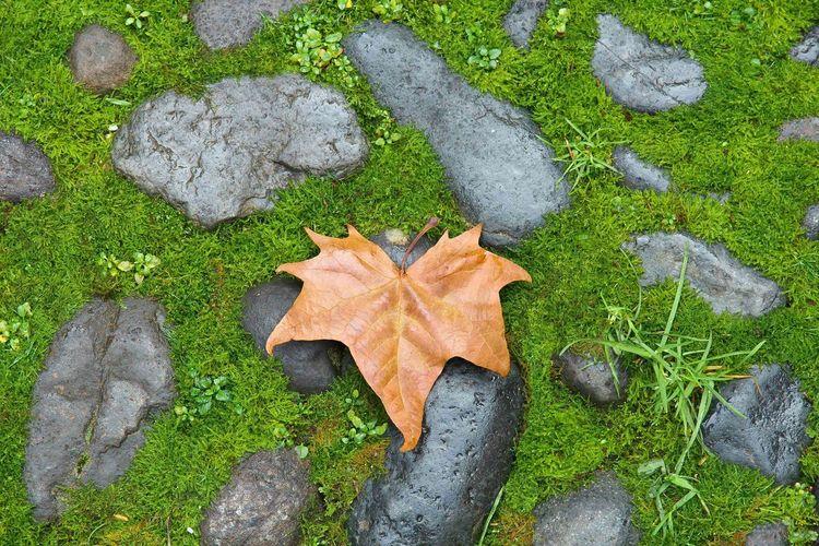 Leaf Moos