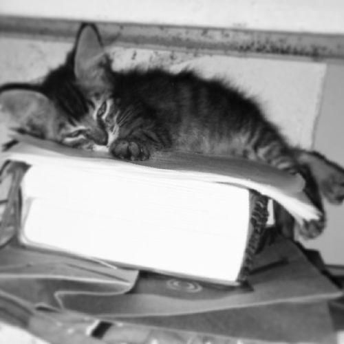 Nao adianta ser só gato, tem q ser inteligente ♥ Estudoutantoqdormiu Meubebe Mamãeama