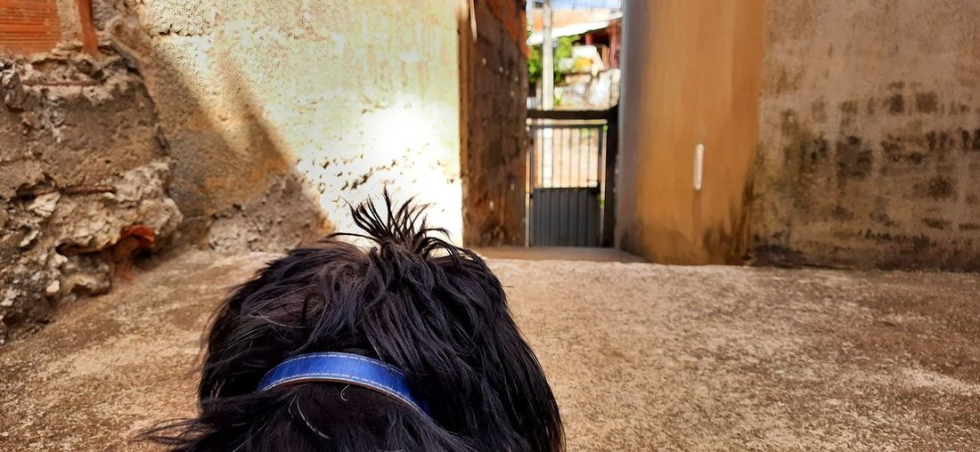 View of a horse in front of wall