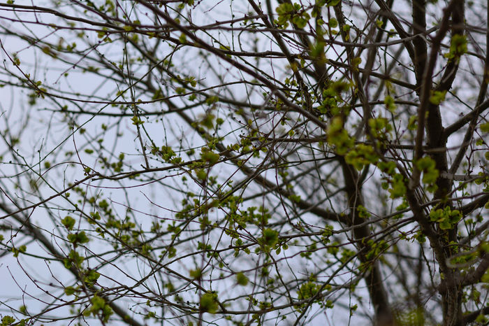 Beauty In Nature Botany Branch Branches Close-up Day Flower Focus On Foreground Fragility Freshness Full Frame Green Green Color Growing Growth Low Angle View Nature No People Outdoors Scenics Sky Tranquil Scene Tranquility Tree WoodLand