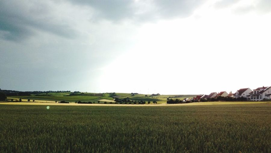 Auf dem Feld 💚🍁🚬💨 Mainz Mitrené Green Chill