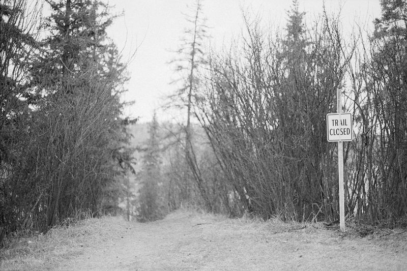 Tree Road Nature Forest Road Sign Communication Day Outdoors Guidance No People Sky Full Frame 35mm Film Analogue Photography Black & White NatureBlack And White Blackandwhite Blackandwhite Photography Caffenol Canon AE-1 Film Beauty In Nature Bare Tree The Secret Spaces