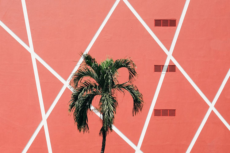 Palm tree against red wall