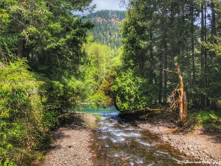 Looking down the creek path. Plant Tree No People Nature Water Growth Green Color Day Beauty In Nature Outdoors Sunlight Tranquility Land Wet Motion Forest Scenics - Nature
