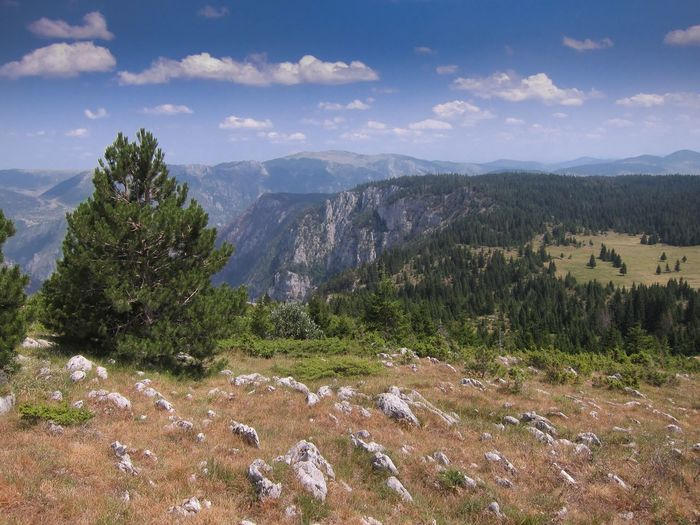 Tara Canyon Montenegro Travel Landscape scenery