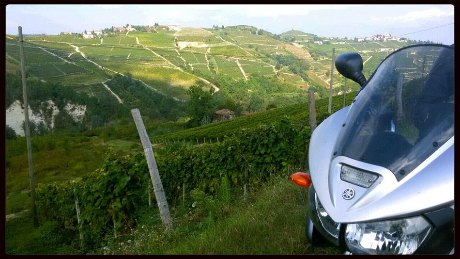Langhe moscato Wine Piemonte Motorbike Enoturismo Wineyard Motorcycle Mototour Turism I Love My Country I Love Wine Landscape Mobilephotography Galaxys3