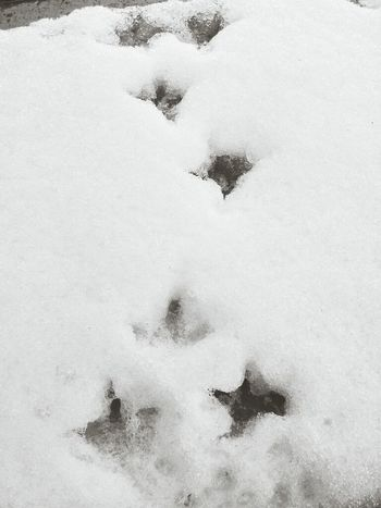 Pigeon Tracks In The Snow Up Close Street Photography in Belgrade