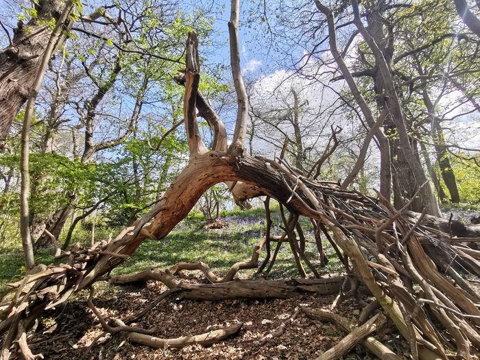 Fallen tree in forest