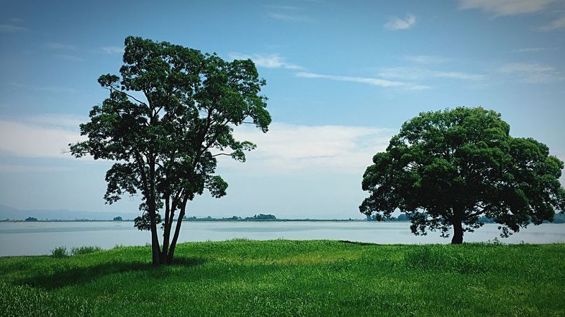 Tree Beauty In Nature Nature Growth Tranquility Green Color Tranquil Scene Landscape Sky Scenics Field Grass Day Outdoors No People Horizon Over Water Lone Branch