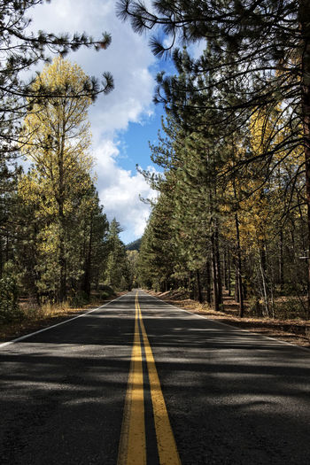 Road in a Pine Forest Asphalt Beauty In Nature Day Diminishing Perspective Nature No People Outdoors Road Road Marking Scenics Sky The Way Forward Tranquil Scene Tranquility Transportation Tree