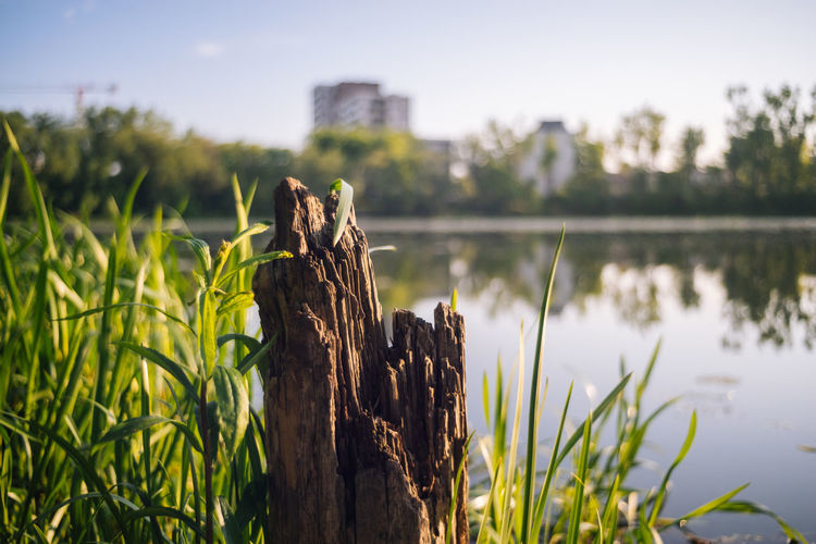 Sony A7r Minolta Manual Lenses Poland Polska Plant Lake Focus On Foreground Nature Water Growth Day Tree No People Vertebrate Animal Green Color Sky Animal Themes Grass One Animal Beauty In Nature Outdoors Tranquility Wooden Post