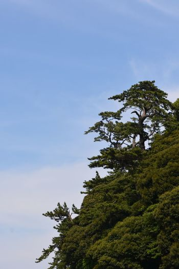 Tree Plant Sky Growth Nature Low Angle View Green Color