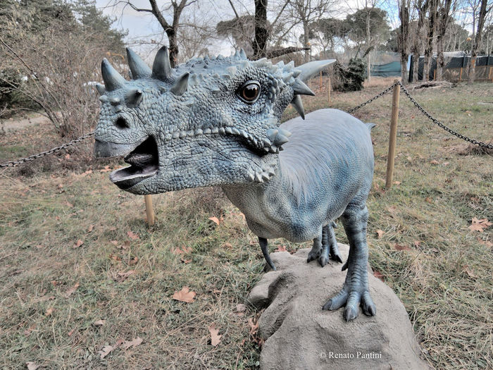 Dracorex hogwartsia Dinosauro Dinosauri Dinosaur Dinosaurs Animal Themes Dracorex Pachycephalosaurus Pachycephalosauridae Animali Estinti Extinct Extinct Species Extinct Animals
