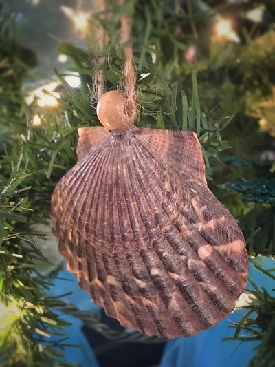 Simple Xmas Tree decoration Nature Close-up No People Tree Shell Seashell Natural Simple Things Are The Best  Decoration Christmas Tree Christmas Decoration Things I See Vision Is Seeing Beyond What's In Front Of You Beautiful Keeping It Simple