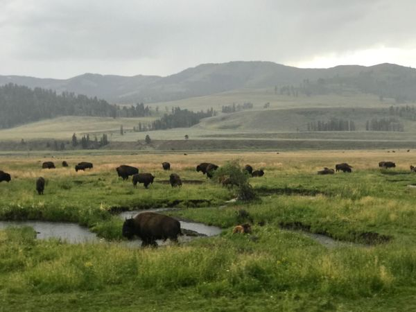 Animal Themes Grazing Landscape Grass Nature