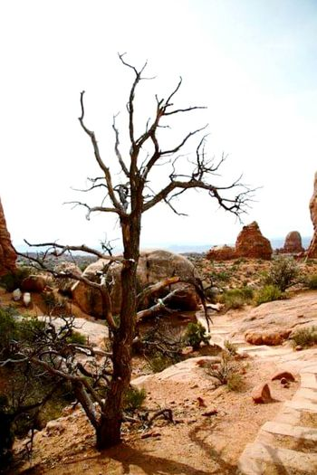 Nature Photography Landscape Nature Photography [a:695979] Utah Desert Outdoor Photography Tree And Sky Deadtree Landscapes