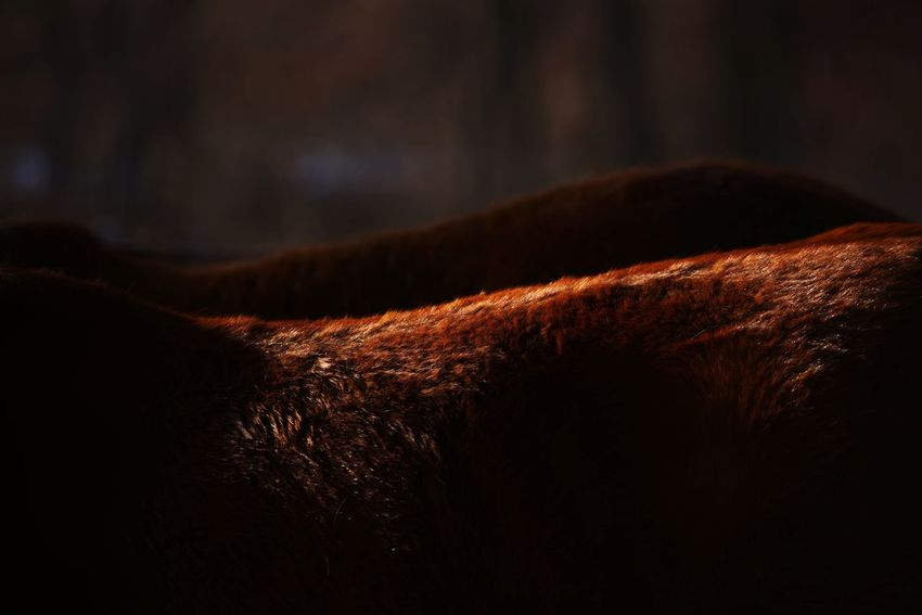 #horse #Nature  #animal #light #skincolor #photography #photo #photoshoot  #EyeEmNewHere #photoshoot