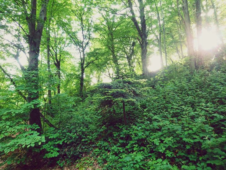 Turkish Istanbul Ormanpark Forest Nature Beauty In Nature Tree Green Color Growth Lush Foliage Day Outdoors Tranquility Low Angle View No People Leaf Scenics Branch Tree Area Sky Freshness The Great Outdoors - 2017 EyeEm Awards