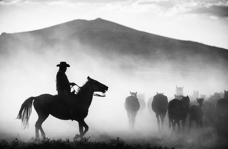 His Territory Horse Animal Wildlife Field Mountain Riding Horseback Riding Dust Outdoors Cowboy Silhouette Blackandwhite Mood Turkey