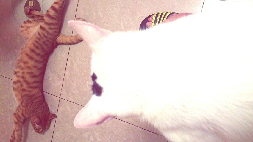 咪:媽媽是我的 喵:我不在乎啊 Cats
