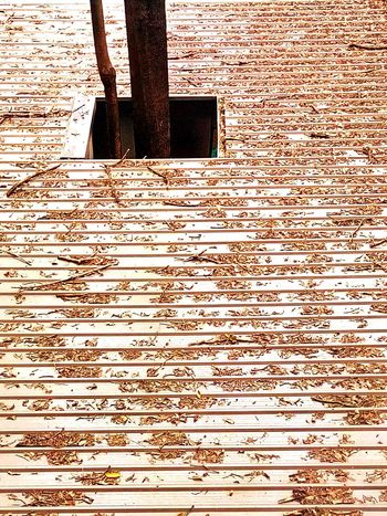 Texture Dry Leaf Dried Leaves Leaves On The Roof Nature Abstract On Roof Art Art Photography