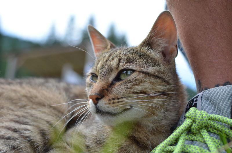 Close-up of cat looking away