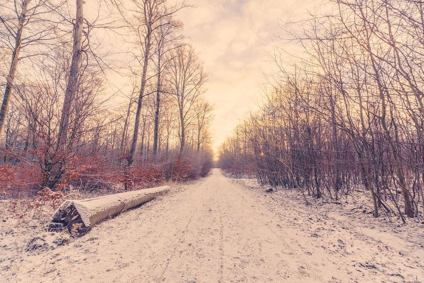 Winter landscape with snow on the trail in the forest Path Way Trail Forest Morning Cold Winter Snow Plant Tree Nature Land Sky No People Tranquility Dirt The Way Forward Outdoors Tranquil Scene Beauty In Nature Sunlight Growth Day Scenics - Nature Direction Environment Field Landscape
