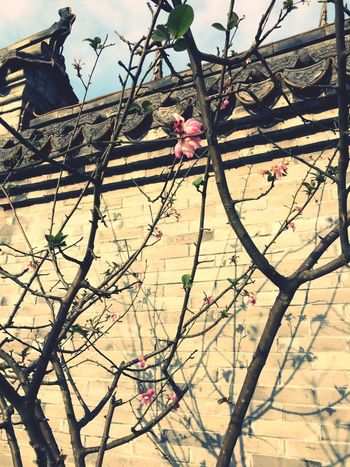 Cold Weather Pink Flower Cold Days 🌷 Flowers 🌹 Old Buildings Chinese Wall Pink Windy Day Chinese Building Sunshine ☀